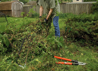 Yard-Work.jpg?width=320